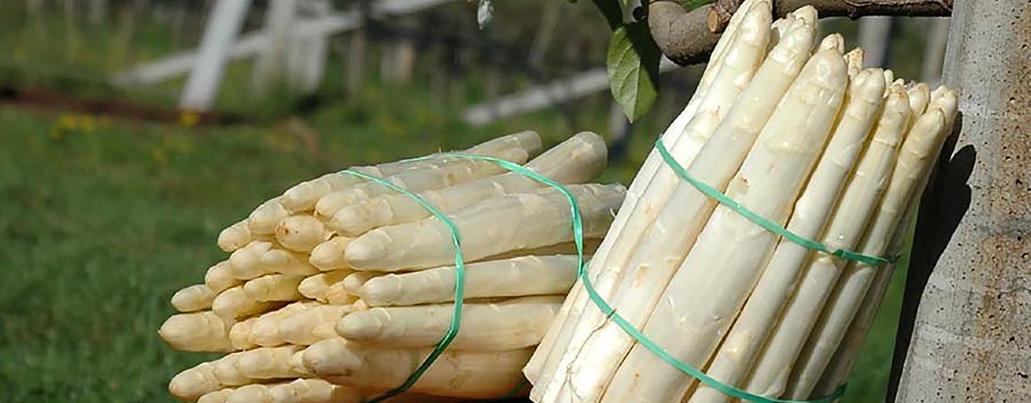 Gli asparagi di Zambana: un assaggio di tradizione appena fuori da Trento
